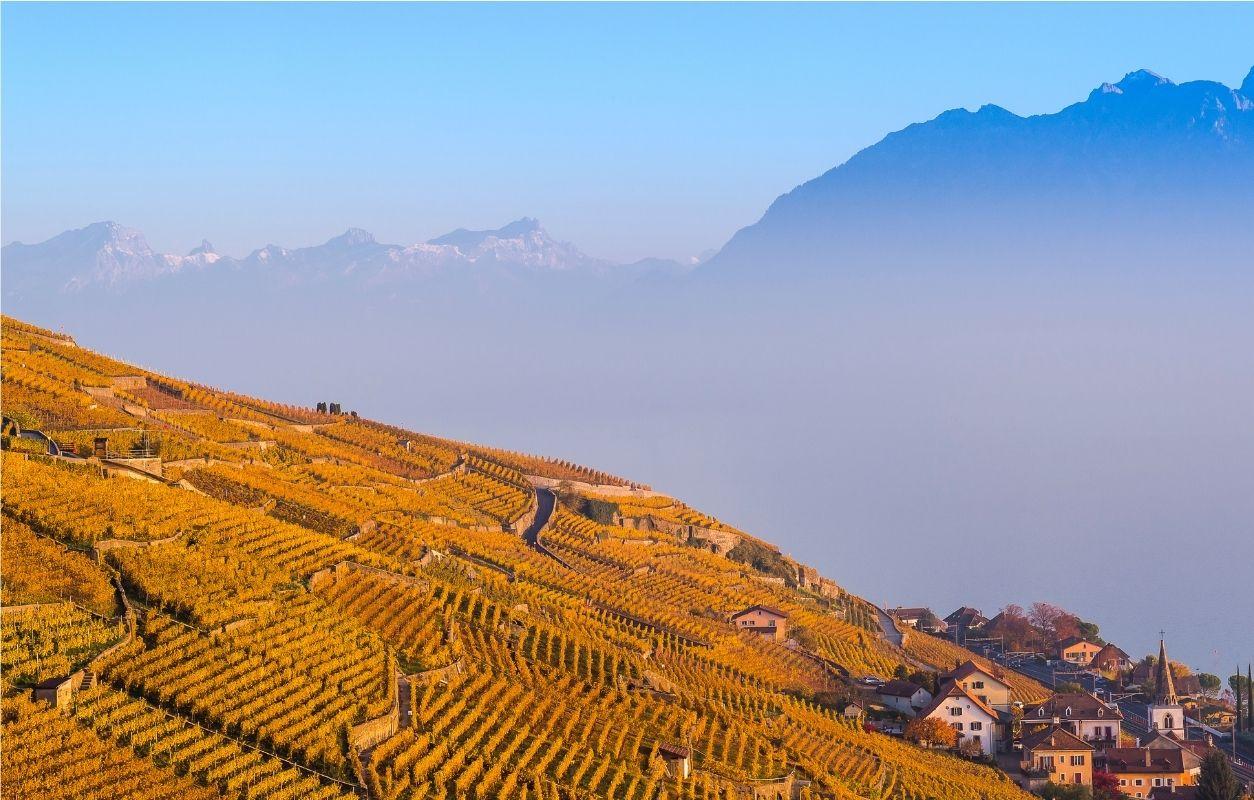 Lavaux suisse et lac léman