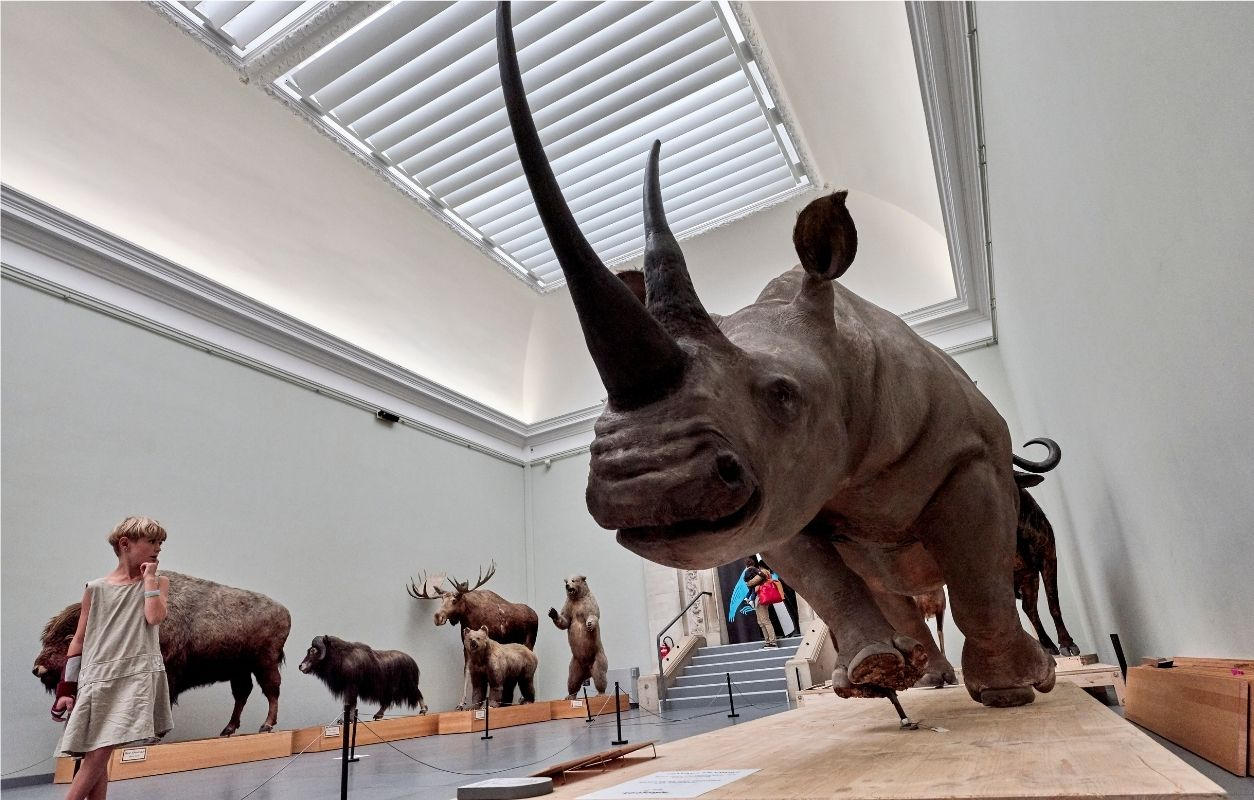 visit to the cantonal museum of zoology in lausanne